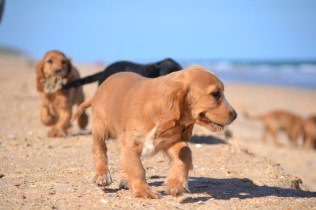 Banksia Park Puppies Beach