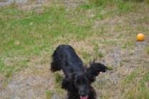 banksia-park-puppies-jacinta-wooster-ella-swoosh-47-of-51