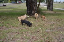 Banksia Park Puppies Sherry, Sharon, Arial, Swoosh 2