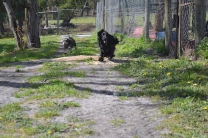 banksia-park-puppies-swish-1-of-34