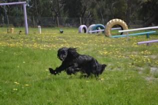 banksia-park-puppies-swish-10-of-34