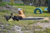 banksia-park-puppies-swish-14-of-34
