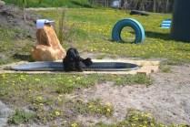 banksia-park-puppies-swish-16-of-34