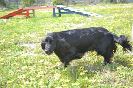 banksia-park-puppies-swish-23-of-34