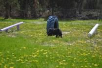 banksia-park-puppies-swish-28-of-34
