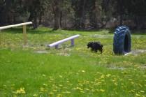 banksia-park-puppies-swish-29-of-34