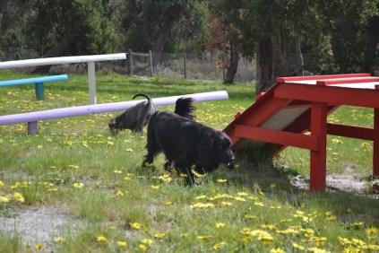banksia-park-puppies-swish-31-of-34