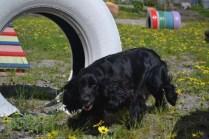 banksia-park-puppies-swish-8-of-34