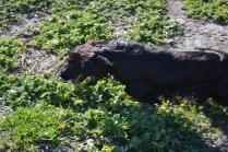 Banksia Park Puppies Swoosh - 1 of 37