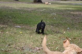 Banksia Park Puppies Swoosh 13