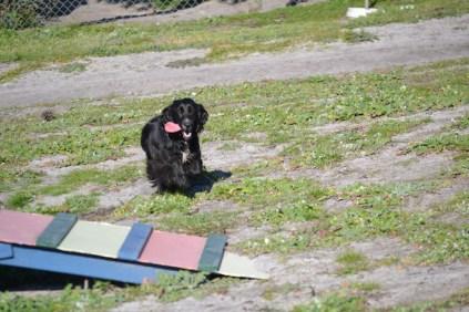 Banksia Park Puppies Swoosh - 19 of 37