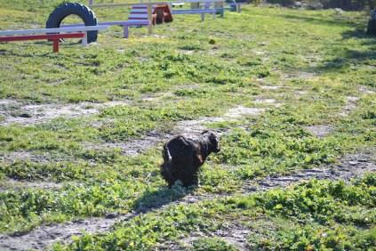 Banksia Park Puppies Swoosh - 2 of 37