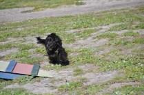 Banksia Park Puppies Swoosh - 20 of 37