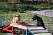 Banksia Park Puppies Swoosh - 22 of 37