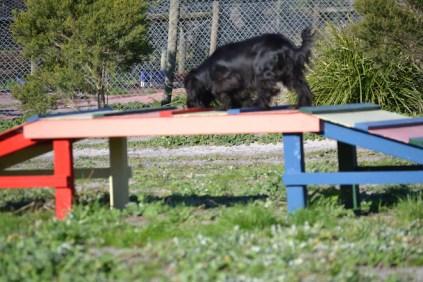 Banksia Park Puppies Swoosh - 35 of 37