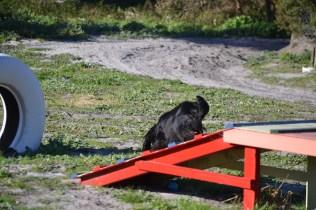 Banksia Park Puppies Swoosh - 36 of 37