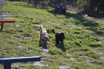Banksia Park Puppies Swoosh - 6 of 37