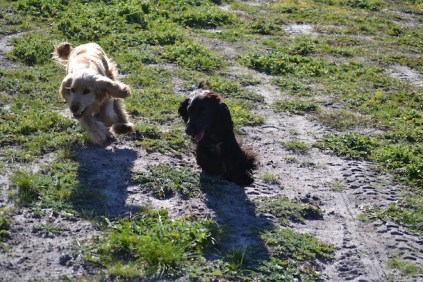 Banksia Park Puppies Swoosh - 8 of 37