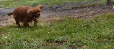 banksia-park-puppies-pavati-14-of-35