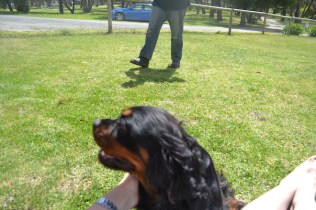 banksia-park-puppies-pruefull-29-of-36