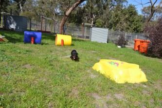 Banksia Park Puppies Pruefull