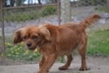 banksia-park-puppies-roz-5-of-8
