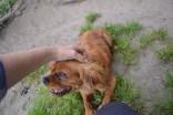 banksia-park-puppies-roz-7-of-8