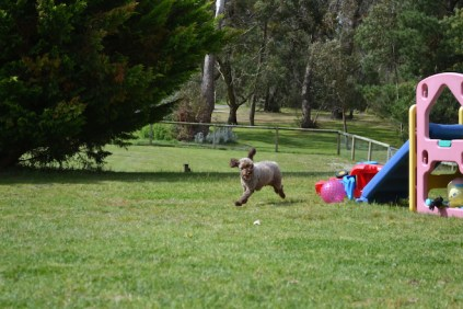 banksia-park-puppies-fire-10-of-29