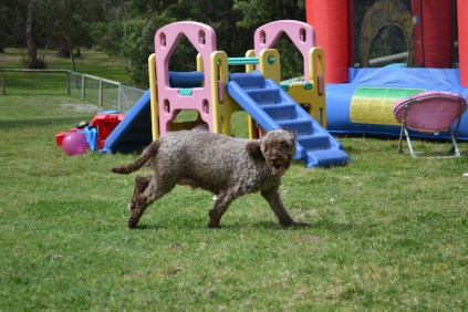 banksia-park-puppies-fire-21-of-29