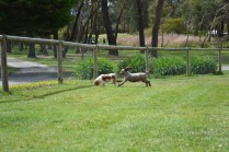 banksia-park-puppies-fire-7-of-29