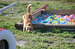 Banksia Park Puppies Oops - 11 of 54