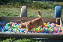 Banksia Park Puppies Oops - 16 of 54