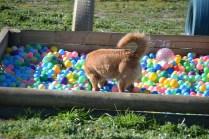 Banksia Park Puppies Oops - 19 of 54