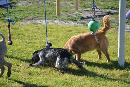 Banksia Park Puppies Oops - 21 of 54