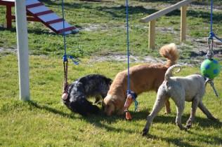 Banksia Park Puppies Oops - 22 of 54