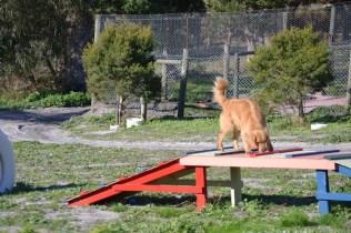 Banksia Park Puppies Oops - 33 of 54