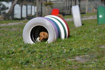 Banksia Park Puppies Oops - 38 of 54