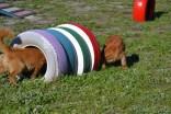 Banksia Park Puppies Oops - 52 of 54