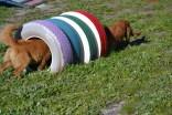 Banksia Park Puppies Oops - 53 of 54