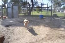 Banksia Park Puppies Ooshka - 22 of 31