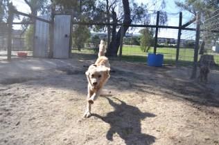 Banksia Park Puppies Ooshka - 30 of 31