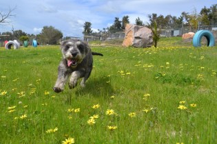 banksia-park-puppies-loopy-14-of-15