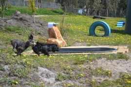 banksia-park-puppies-loopy-2-of-15