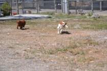 Banksia Park Puppies Muffin Ravi - 17 of 28