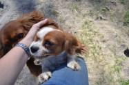 Banksia Park Puppies Ravi Lance - 11 of 47