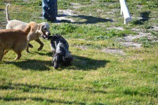 Banksia Park Puppies Shorty - 14 of 36