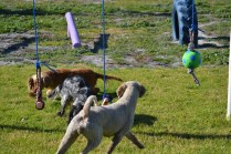 Banksia Park Puppies Shorty - 17 of 36