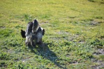 Banksia Park Puppies Shorty - 9 of 36
