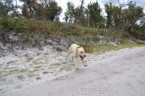 banksia-park-puppies-bluberri-13-of-14