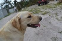 banksia-park-puppies-bluberri-7-of-14